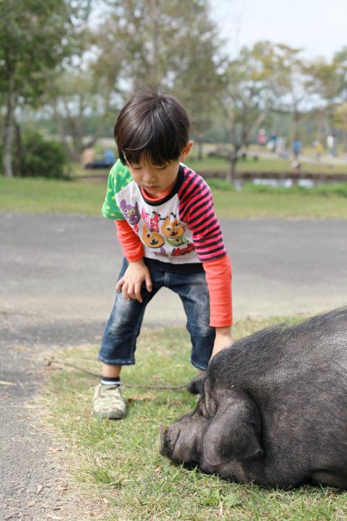 蓮と豚_Fotor.jpg