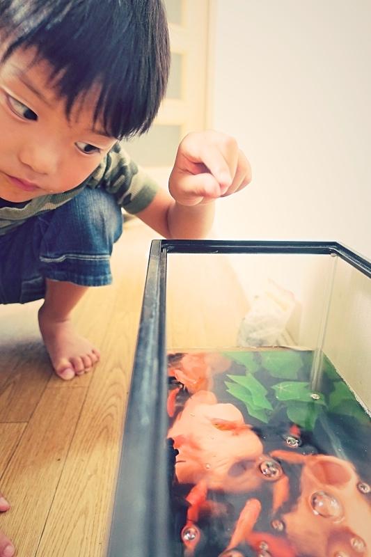 kinngyo _Fotor1.jpg